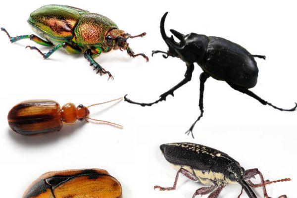 escarabajos53E511E1-F4D0-2639-98B6-6D2D6D5C0423.jpg