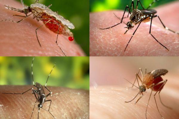 mosquitos907D968F-0892-8FCF-6DE6-CA946EDA1DA6.jpg